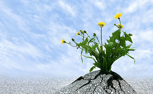 L'Œuvre de Responsabilité et de résilience : comment bâtir et réussir le voyage de la vie ?