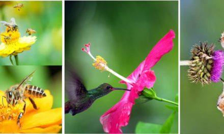 Le voyage du Pollen, une grande merveille pour la biodiversité.